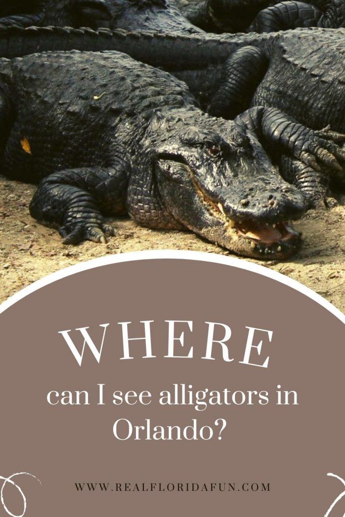 Where Can I See Alligators in Orlando
